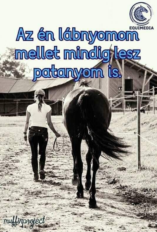 lovas idézetek képekkel Pin by Barta Dalma on x (With images) | Lovas idézetek, Kutyás
