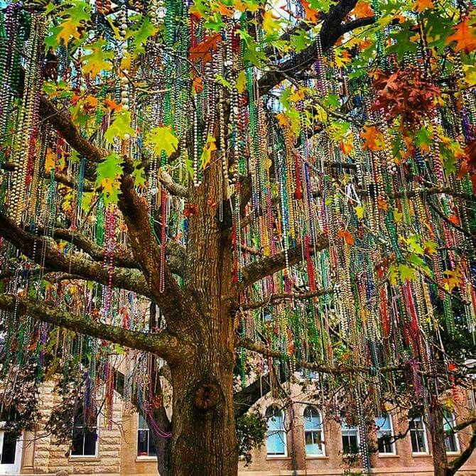 """A """"bead tree"""" in New Orleans, post Mardi Gras. Even though the party is over, the city remains decked out in these shiny, colorful beads for days after."""