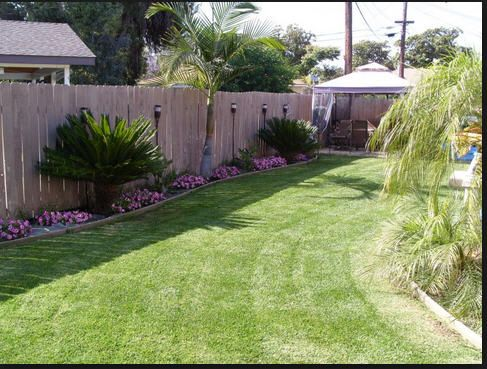 Back fence with sago palms and nice flowers