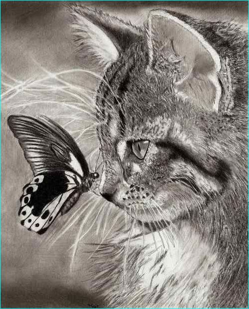 32 Awesome Animal Drawings for Inspiration