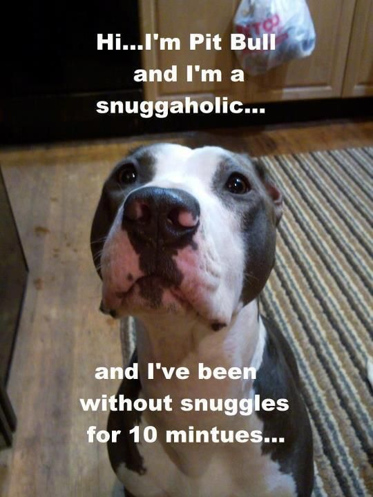 This is definitely something a pitbull would say!!!! They are seriously given the wrong impression by society :(