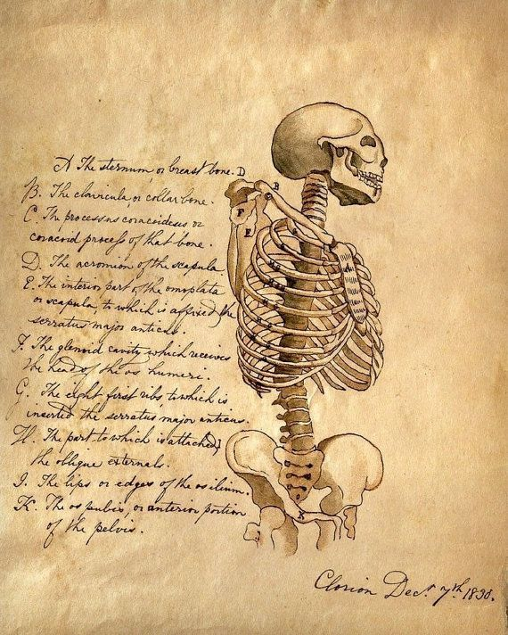 Set of x12 anatomy print collection