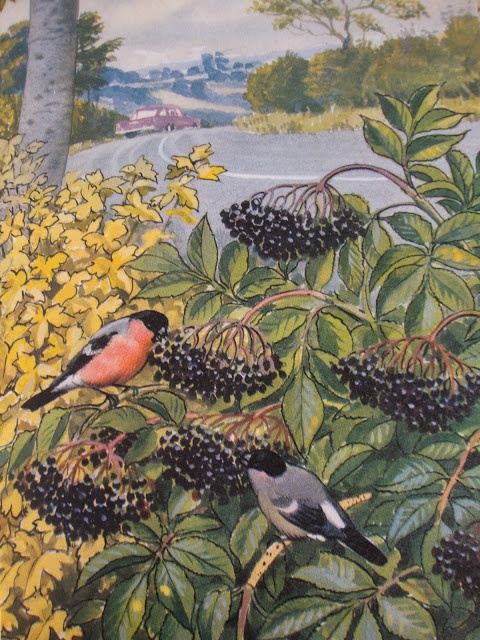 304 Best Artist Cf Tunnicliffe Images On Pinterest