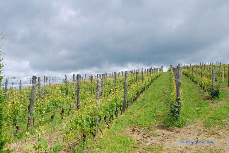 Piemonte, Provincia di Cuneo, La Morra, fraz.Brandini  Vitigni di Nebbiolo - Unesco  http://www.westitaly.net/node/7   #Piemonte #Langhe #unesco #Italy_Travel #provinciadicuneo #visitpiemonte #piemonteturismo