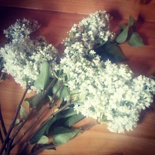 #flower #white #green #brown