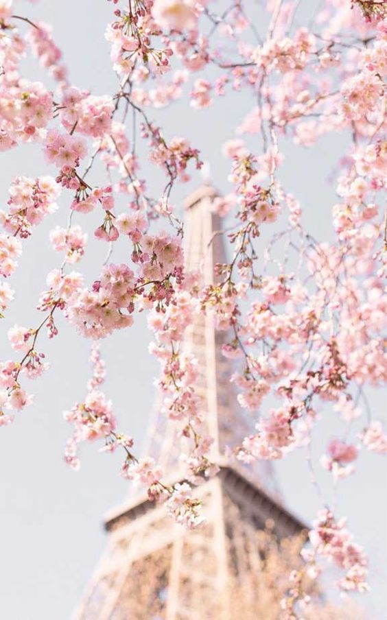 35 Simple Pink Wallpaper Iphone Aesthetic Backgrounds Free Download Cute Pink Wallpaper Bac In 2020 Cherry Blossom Wallpaper Pastel Pink Aesthetic Spring Wallpaper