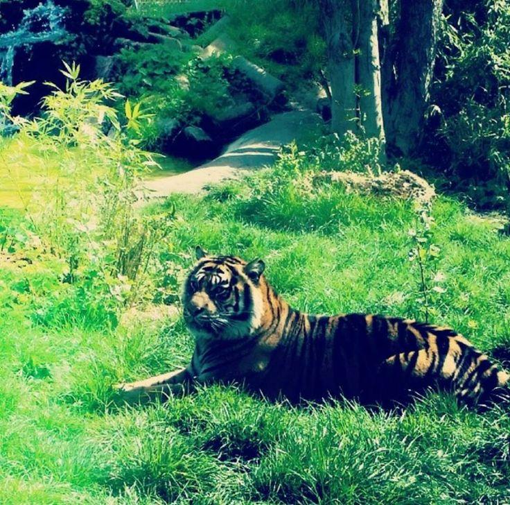 At Chessington zoo