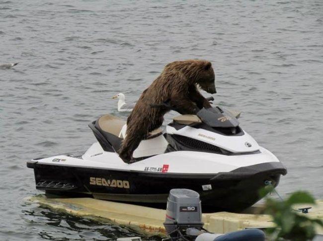 Работящий медведь— счастье всемье. Суровая российская береговая охрана.