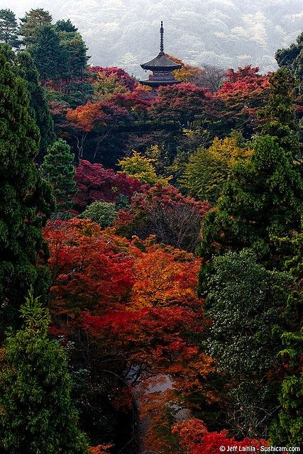 Kiyomizu temple, Kyoto, Japan. Got to spend a few days in Kyoto in 85. Definitely one of my top ten travel destinations. And it was autumn too.
