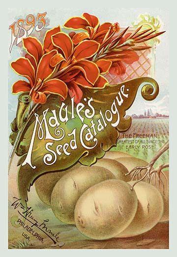 Maule's Seed Catalogue, 1893