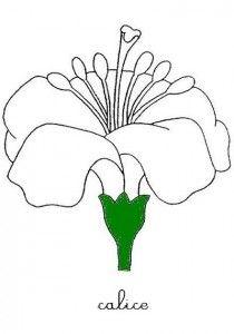 fichier pdf parties de l'arbre fichier pdf parties_de_racine fichier pdfparties de la fleur fichier pdf parties-de-la-fleur-3 fichier pdf pollinisation fichier pdf LES GABARITS POUR PUZZLES