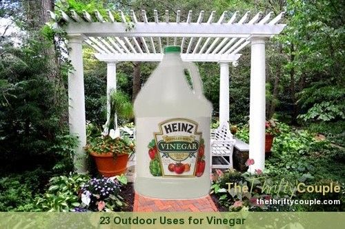23 Uses For Vinegar Outdoors from Gardens, Vehicles to Miscellaneous and More Outside Uses