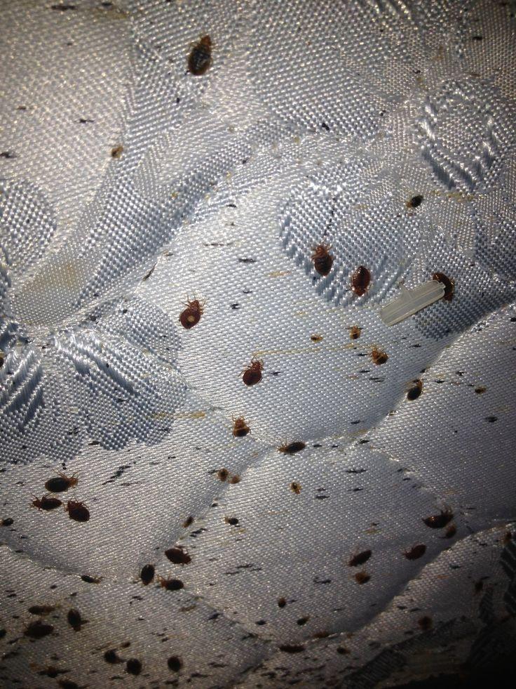 35 Best Bed Bug Awareness Week Images On Pinterest Bed