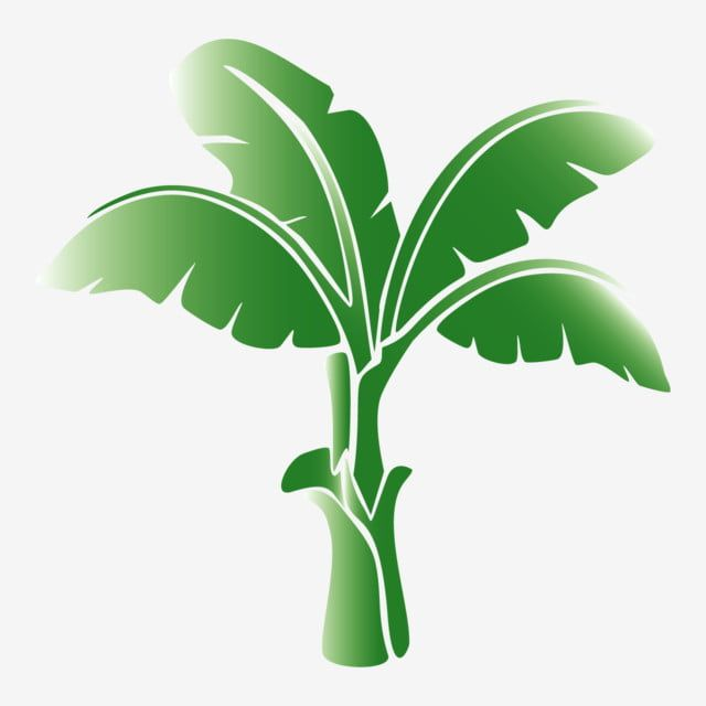 Illustration Of A Banana Tree With A White Background Banana Tree Background Illustration White Background Png And Vector With Transparent Background For Fre Banana Tree Tree Painting Tree Art