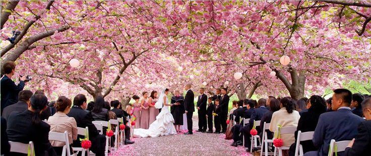 Brooklyn Botanical Garden Wedding | Palm House Brooklyn Botanical Gardens Wedding 2 - New York Gets Wed