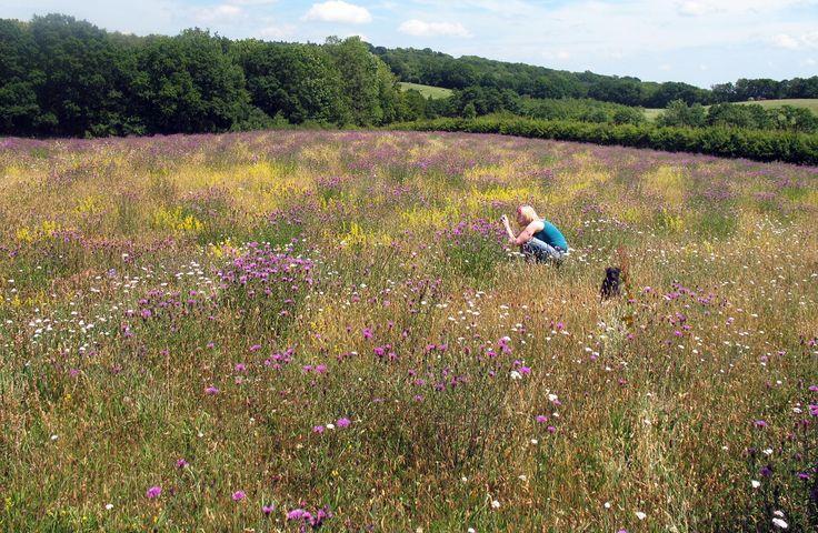 Best 25 wildflower seeds ideas on pinterest wild flower for Wild grass landscaping