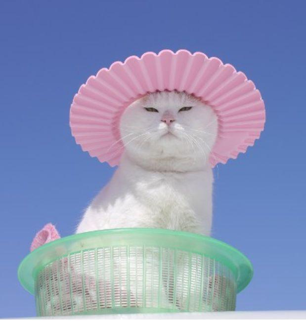 Nobody has more style than Shironeko. Nobody.