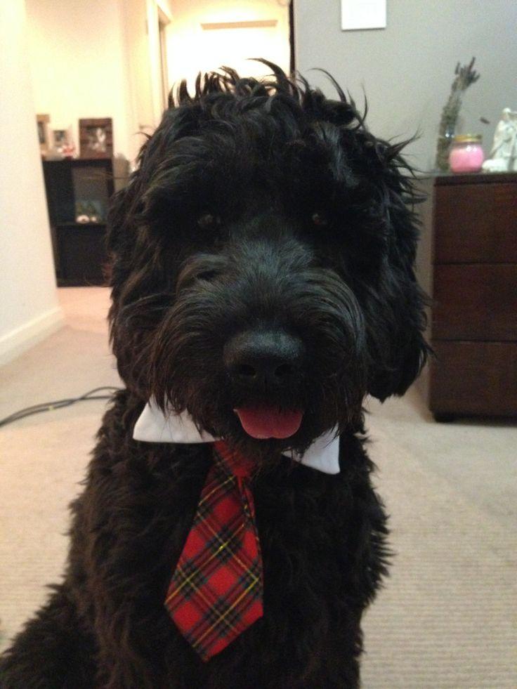 Murphy is so getting a tie