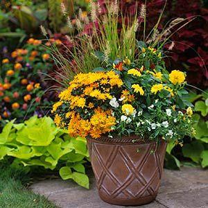 Fall Container Garden with Dahlias