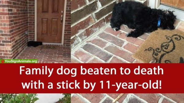 Texas dog pounded with stick until it passed away by 11-year-old boy! Justice For Cookie! | YouSignAnimals.org