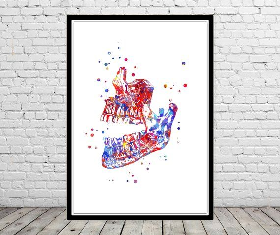Human Mandible Mandible Watercolor Mandible Mandible Print