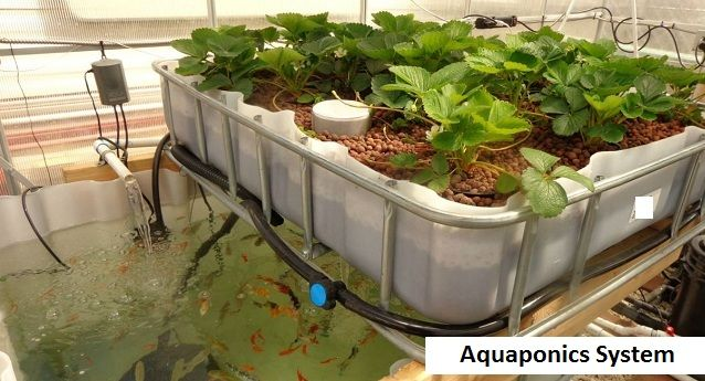 http://www.myaquahouse.com/  Learn More Here - Aquaponics Design,  The how to build an aquaponics system rest of the will postulate specific lighting. on that point are premade unities or you may make an optimal unwavering, you can begin planting your seeded players.  Indoor Aquaponics,What Is Aquaponics,Indoor Aquaponics System