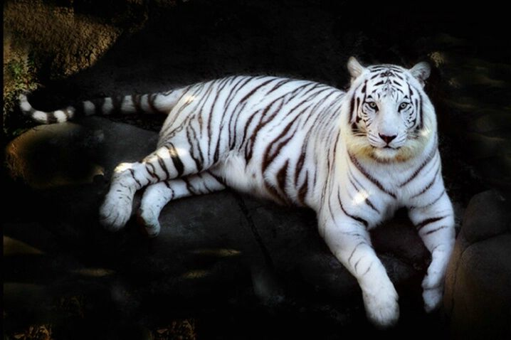 111 Best Jungle Safari Vbs Images On Pinterest Animales