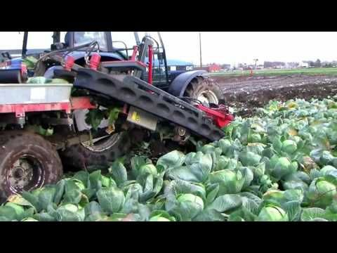 new modern agriculture equipment, automatic cabage harvest machine, amaz...
