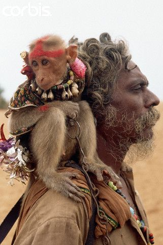 Monkey Perched on Street Performer's Shoulder. A singer/storyteller and his costumed monkey perform tricks for tourists visiting the beach. Hanuman, a monkey god in the Hindu pantheon is the loyal friend to Lord Rama in the great Hindu epic the Ramayana. Lindsay Hebberd, 1992. Mamallapuram, India
