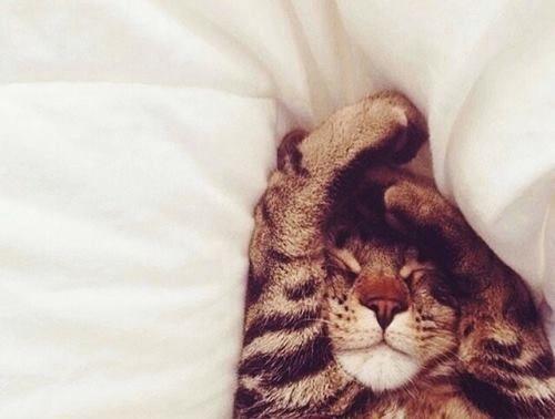 Sleepy Head..