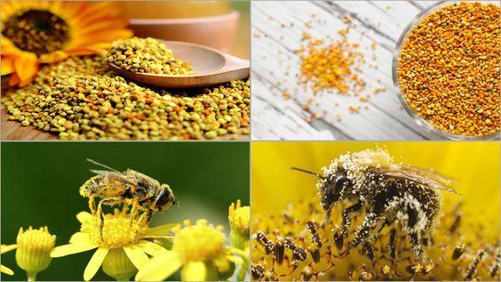 İçerdiği mineral ve vitaminlerle şifa veren arı poleni, herkes tarafından tüketilmesi gereken ve sağlık için birçok faydası olan doğanın sarı harikasıdır. Saf yani gerçek arı poleni, büyümeye doğrudan etki ediyor ve çocukların gelişimini hızlandırıyor.