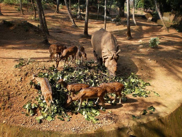 Thiruvanathapuram Zoo