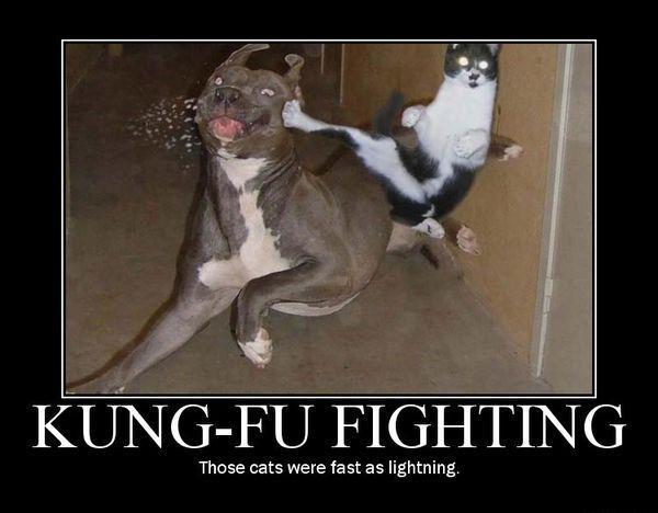 Funny Animal Memes Of The Day – 30 Pics Ep6 – Picterest #dogmemeshilarious #dogmemesfunny #dogmemes #catmemes #dogandcatmemes #cat #dog
