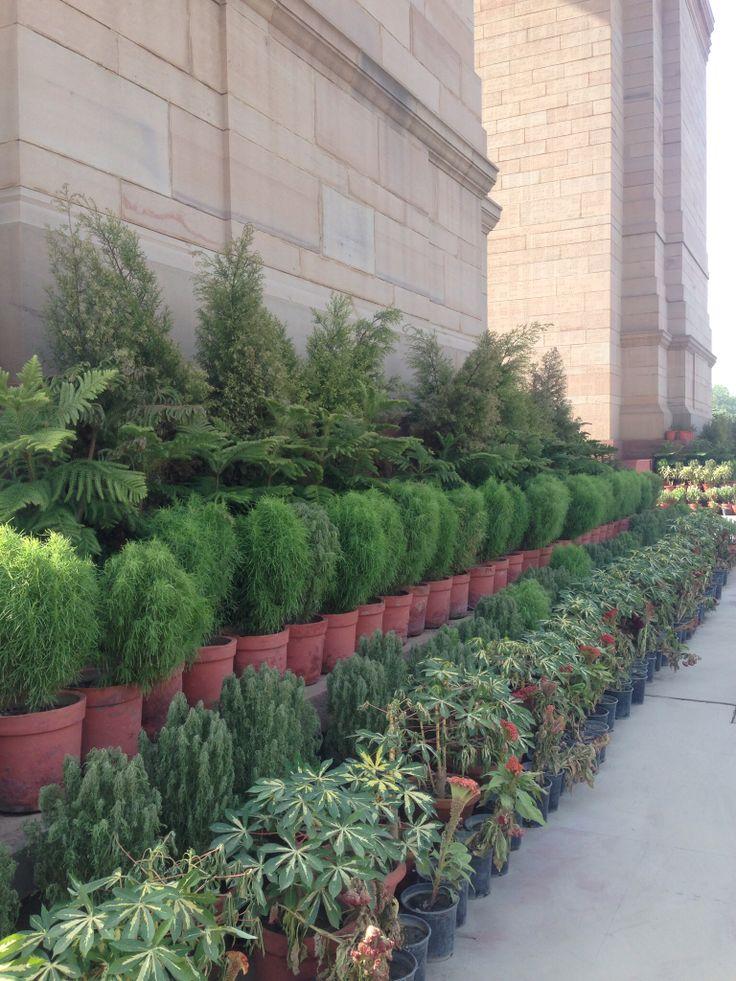Plants at India Gate, Delhi India