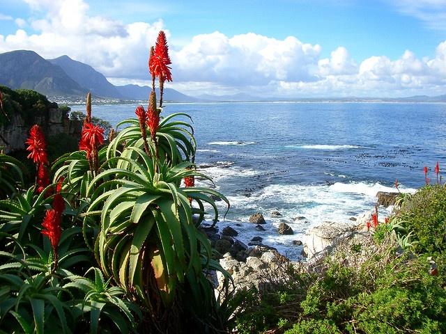 South African Overberg, Western Cape. BelAfrique your personal travel planner - www.BelAfrique.com