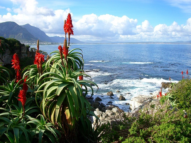South African Overberg, Western Cape. BelAfrique your personal travel planner - www.BelAfrique.com