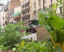 Planter des poireaux sur les trottoirs parisiens c'est possible
