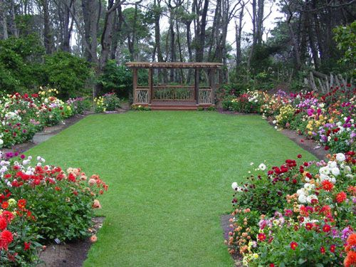 42 Best Dahlia Gardens Images On Pinterest
