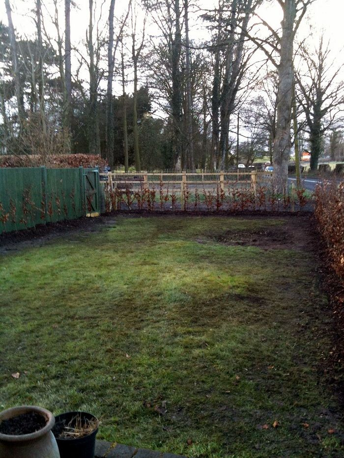 The 'blank canvas'. Garden after removal of the tree stump and hedge planting. The left hand fence (which could not be removed) has been painted dark green so that it will 'disappear' when the hedge grows www.ebgardendesign.co.uk