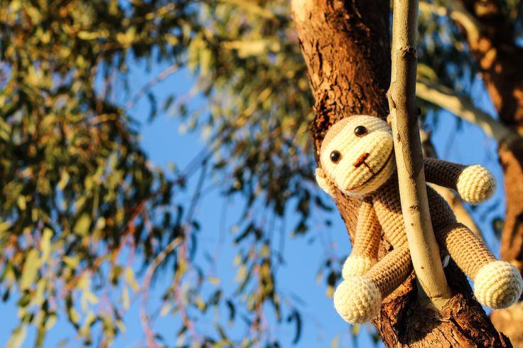 Cheeky monkey up a tree!