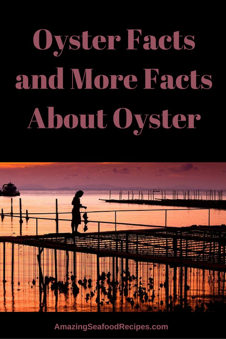 Oysters are interesting creatures. They come in many different varieties that have their own shell designs and colors. Aside from being delicious, oysters are also fascinating. Here are a few fun facts you may not have known about oysters.