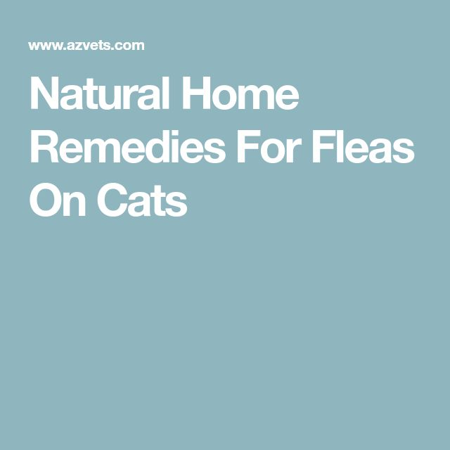 Natural Home Remedies For Fleas On Cats