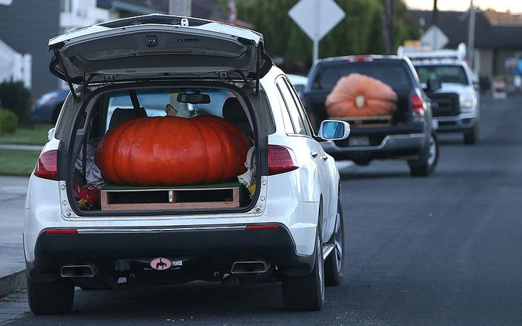 A large pumpkin sits in the back of an SUV during the 41st Annual Safeway World Championship Pumpkin Weigh-Off