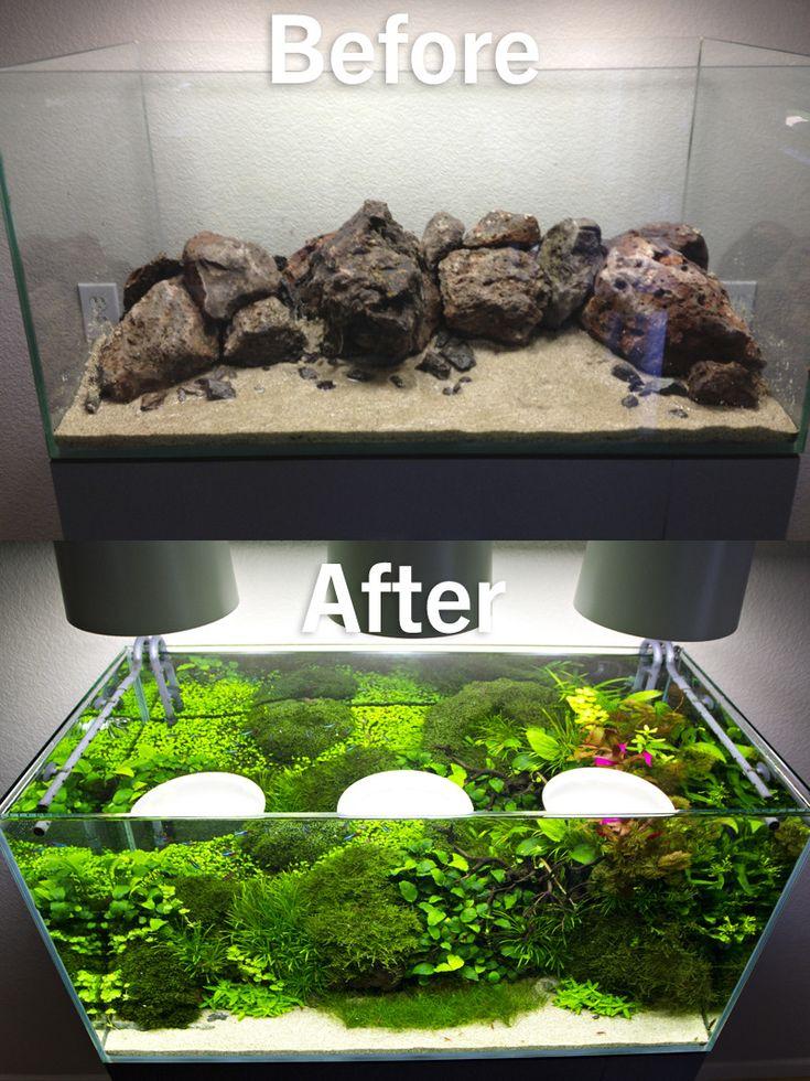Best 25 1 gallon fish tank ideas on pinterest betta for One gallon fish tank