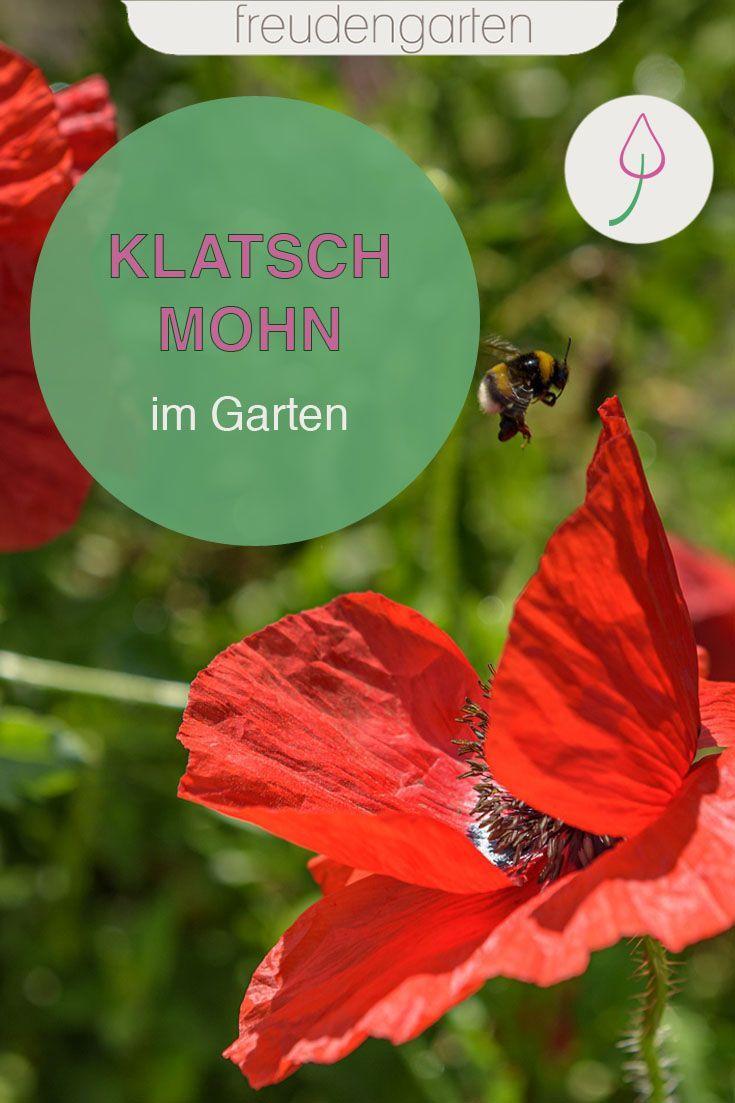Mohnblumen Pflanzen Pflegeleichte Pflanzen Bienenfreundlicher Garten