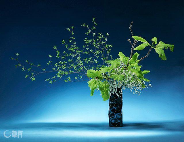爽やかな風に踊るようなどうだんつつじとほおの木。葉の表情に惹かれ、色味はグリーンとホワイトで統一しました。花材:どうだんつつじ、ほおの木、スターチス 花器:自作陶器花器 Enkianthus perulatus and magnolia obovata seem as if they are dancing with crisp winds. Attracted by the expression of leaves, I unify colors in green and white. Material:Enkianthus perulatus, Magnolia obovata, Statice Container:Self-made ceramic vase #ikebana #sogetsu