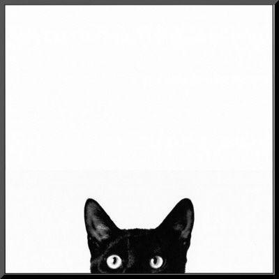 好奇心: Curiosities Mount, Funny Cat, Curio Mount, Black Cats, Chatnoir, Art Com, Mount Prints, Jon Bertelli, Cat Prints