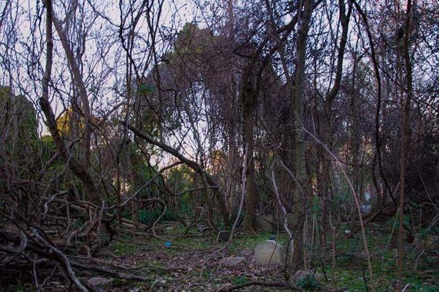 Il cimitero per animali abbandonato da 30 anni 15