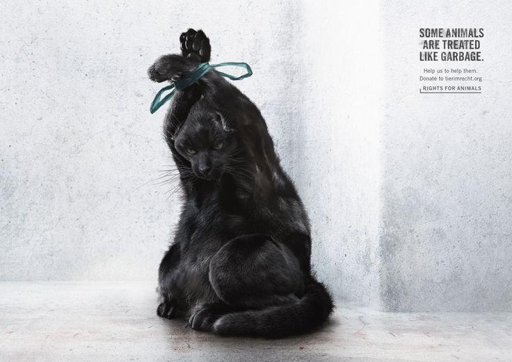 Foundation Tier im Recht: Cat | Ads of the World™