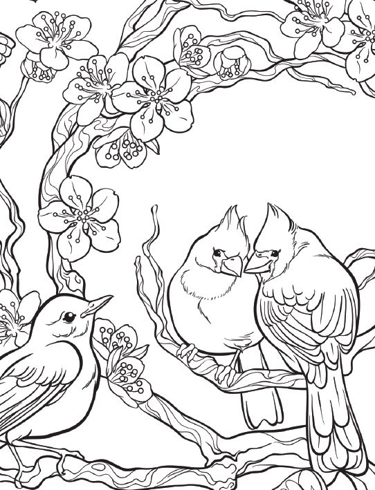 Coloring Template Inspired By Nature Birds Blossoms Coloringbook